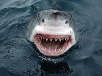 tiburón blanco riendo
