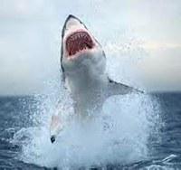 Espectacular imagen del tiburón blanco